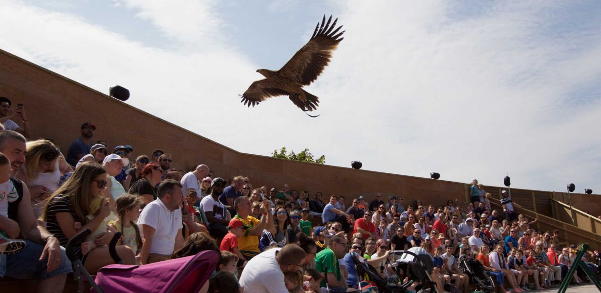 TAYTO PARK FLYING HIGH WITH RAPTOR-OUS NEW BIRDS OF PREY SHOW