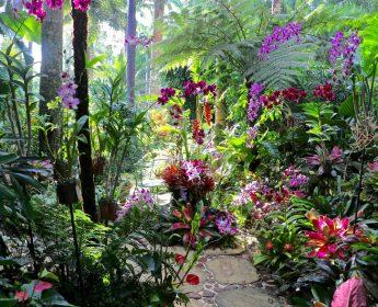 Hunts Garden Barbados